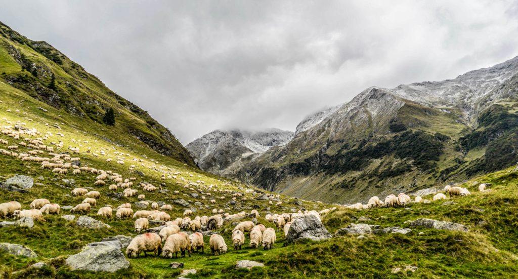 ニュージーランドおすすめ観光スポット